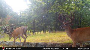 Trail Cam 52 0819