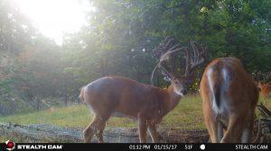 Trail Cam 58 0819