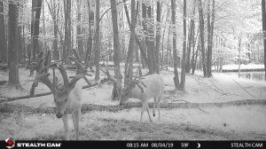 Trail  Cam 53 0819