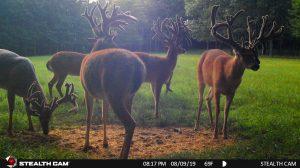 Trail Cam 60 0819