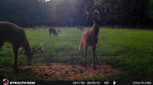 Trail Cam 61 0819