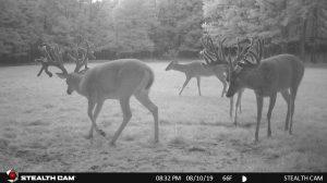 Trail Cam 64 0819