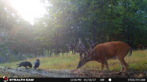 Trail Cam 65 0819