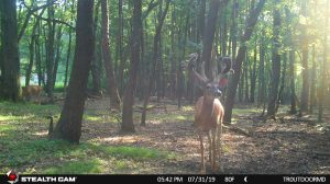Trail Cam 51 0719